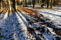 Game of shadows in the forest in winter with snow oak pine Stock Photography