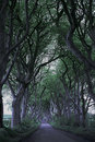 Game of thrones dark hedges n ireland the at the north coast northern these appear in Stock Image