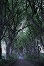 Game of Thrones Dark Hedges N.Ireland