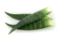 Gamma leaves aloe vera on white background Stock Images