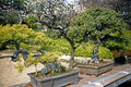 Gammala japanska bonsai, Tokyo, Japan 免版税库存照片