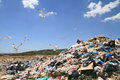 Garbage and seagulls flock of over landfill Royalty Free Stock Photography