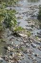 Garbage in water  sacred hinduism Bagmati river. Royalty Free Stock Photo