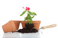 Gardeining supplies including clay pots a trowel soil and a flower Stock Images