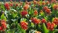пре? посы? ка цветка garden Стоковое Фото