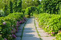 Garden alley in a sunny day blossoms bushes Royalty Free Stock Image