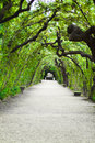 Garden arbor tunnel Royalty Free Stock Photo