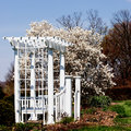 Garden Arbor and White Magnolia Tree Royalty Free Stock Photos