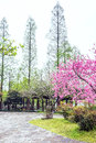 Garden architecture and The peach blossom Royalty Free Stock Photo