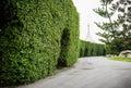 Garden Archway In Bloom