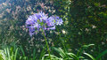 Garden in Ba Na hills Royalty Free Stock Photo