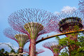 Garden by the bay in singapore supertree grove Royalty Free Stock Photo