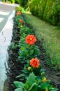 Garden bed with different colors flowers in summer Royalty Free Stock Photo