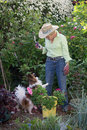 Garden begging an insistent pomeranian dog tries to get the attention of her ninety year old companion as she works her Royalty Free Stock Image