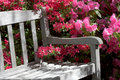 Garden bench and flowers Royalty Free Stock Image