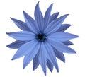 Garden Blue Flower, White Isol...