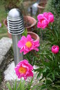 Garden bollard lighting Stock Image