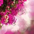 Garden with bouganvilla flowers Royalty Free Stock Photo