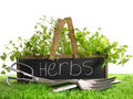 Garden box with assortment of herbs and tools Royalty Free Stock Photos