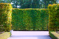Garden bushes green in a park Royalty Free Stock Photo