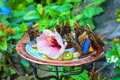 Garden butterflies feeding at a feeding station in the Royalty Free Stock Photos