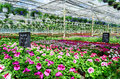 Garden center flower market full of blooming flowers Stock Photography