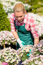 Garden center woman check daisy flowerbed Royalty Free Stock Photo