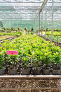 Garden centre or plant nursery interior view of garden centre Royalty Free Stock Photography