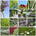 Garden collage Royalty Free Stock Image
