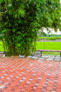Garden in country chachoengsao thailand Stock Image