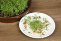 Garden cress, homemade cultivation Royalty Free Stock Photos