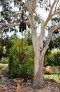 Garden Decor at Amaze'n Margaret River Royalty Free Stock Photo
