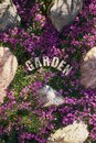 Garden design, a spring carpet of pink-purple flowers Royalty Free Stock Photo