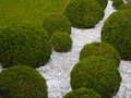 Garden detail with box trees and white gravel Stock Image