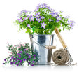 Garden equipment with violet flowers Stock Image