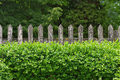 Garden fence box hedge and old wooden Stock Photo