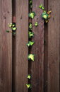 Garden fence with a branch plant Stock Photo