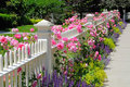 Garden fence with pink roses Stock Photo