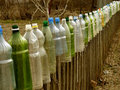 Garden fence with plastic bottles which used to protect tomato seedlings from cold spring weather as small hotbeds Royalty Free Stock Photos