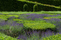 Garden with the flourishing lavender at castles in valley of loire Stock Image