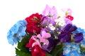 Garden flowers Royalty Free Stock Photo