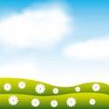 Garden flowers and grass field