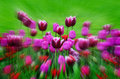Garden of flowers and tulips tulip with variety freshly grown greenery Stock Photography