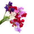 Garden flowers vetchling Royalty Free Stock Photo