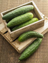 Garden Fresh Cucumbers Royalty Free Stock Photo