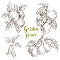 Garden fruits, apples, apricots, cherries, plums
