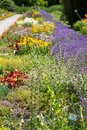 Garden full of flowers at the Botanic Garden of the Jagiellonian University, Krakow, Poland. Photographed in summer. Royalty Free Stock Photo