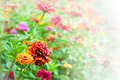 Garden full of flowers Royalty Free Stock Photo