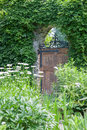 Garden gate gated with vine covered wall Stock Image