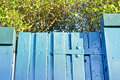 Garden gate hinge on a blue wooden Royalty Free Stock Images